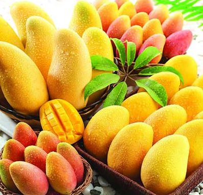 mango-otzivu