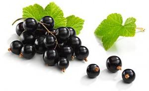 свойства чёрной смородины