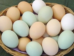 отзывы о яйцах